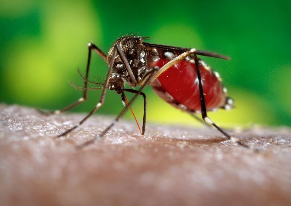zika-virus-singapore